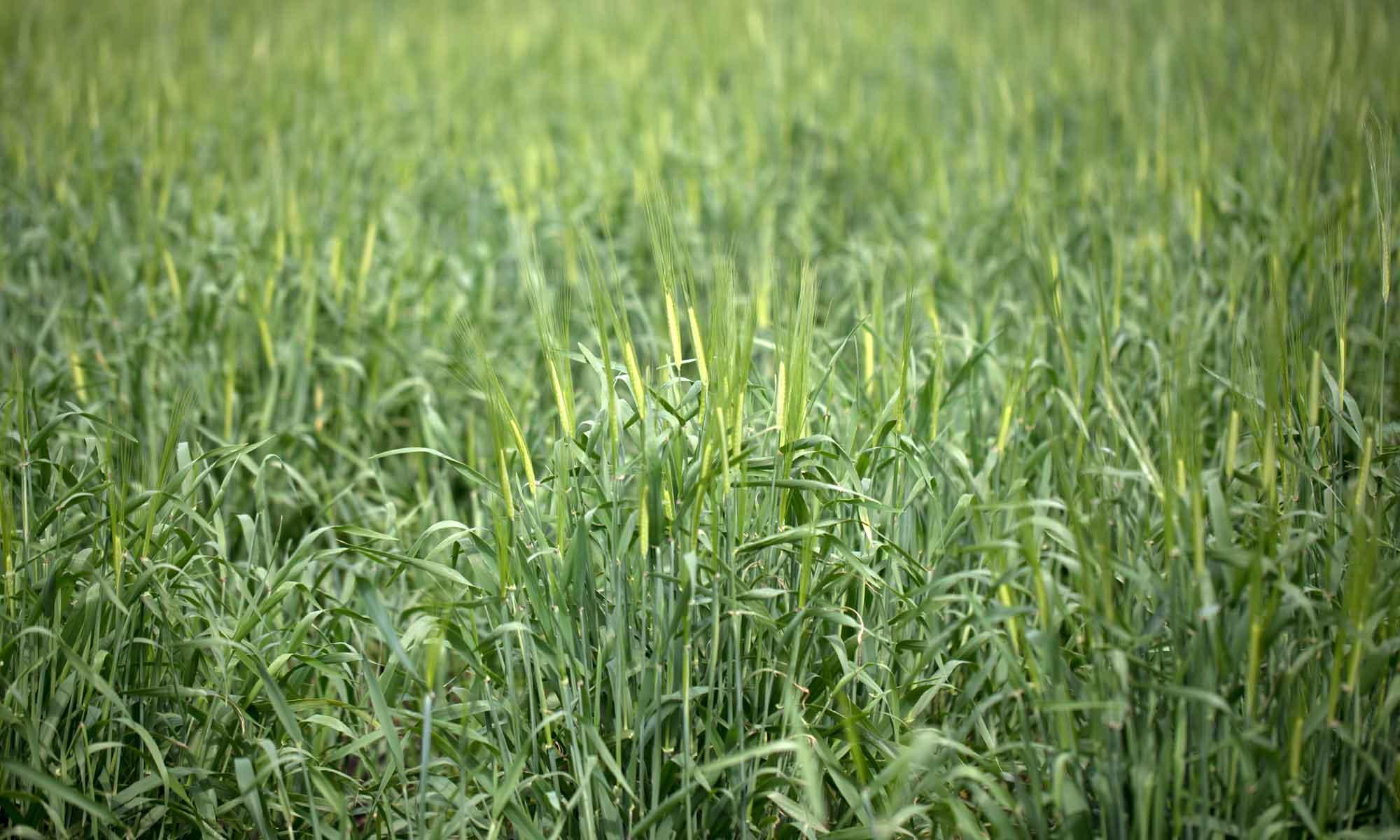 練馬区農業体験農園 イガさんの畑